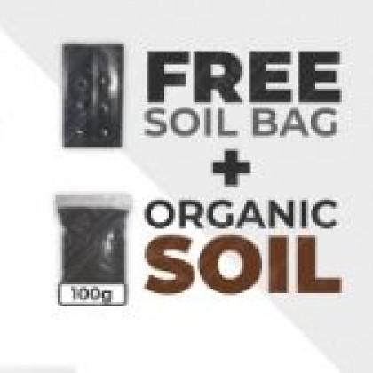 Cat Grass Pet Kit Grow Yourself DIY Organic Wheatgrass Seed Eco-Friendly